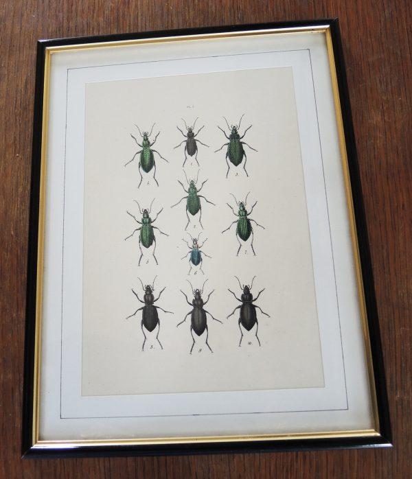 ancienne-gravure-sur-acier-encadree-19eme-10-scarabees