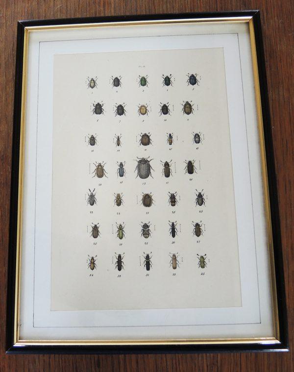 ancienne-gravure-sur-acier-encadree-19eme-35-scarabees