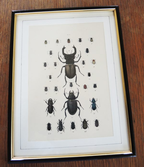 ancienne-gravure-sur-acier-encadree-19eme-27-scarabees