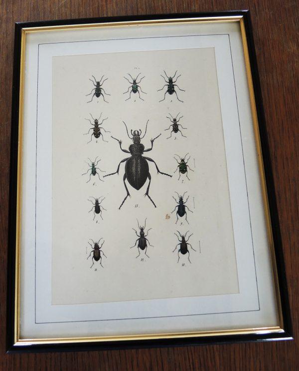 ancienne-gravure-sur-acier-encadree-19eme-13-scarabees