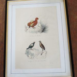 Gravure Sur Acier Vintage Encadrée 19eme : 3 Oiseaux