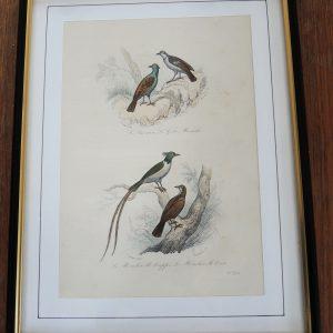 Gravure Sur Acier Vintage Encadrée 19eme : 4 Oiseaux
