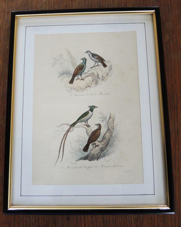 ancienne-gravure-sur-acier-encadree-19eme-3-oiseaux