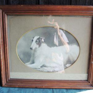 Portrait Encadré Vintage D'un Barzoi Allongé